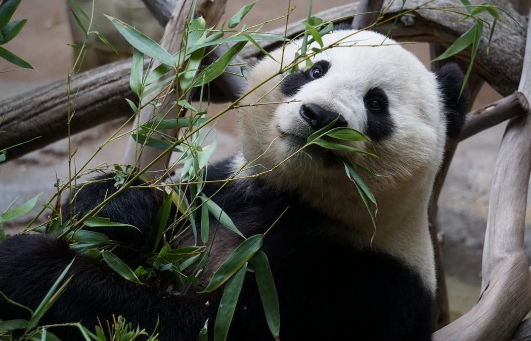 Beauty Over 50:  My Love of Bamboo