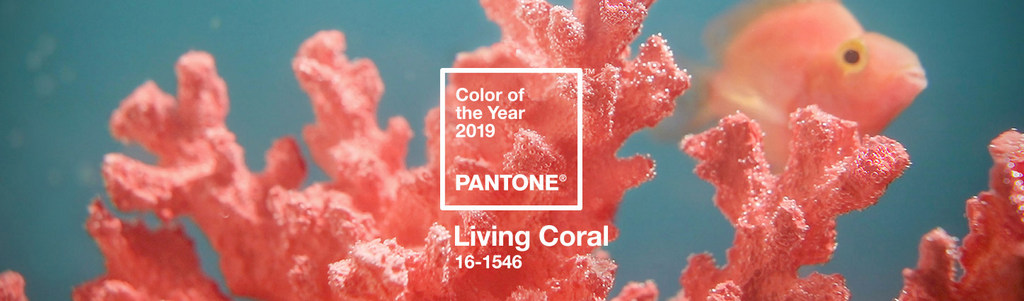 Before You Shop…Know the Color of the Year