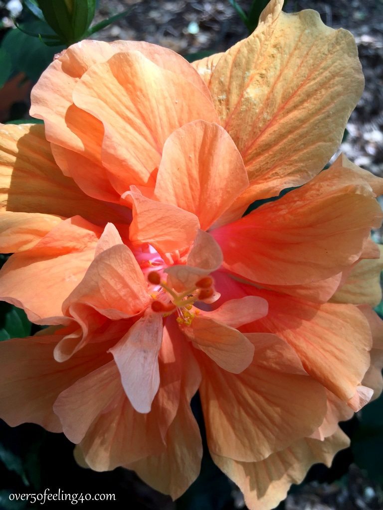Over 50 Feeling 40 with hibiscus flowers