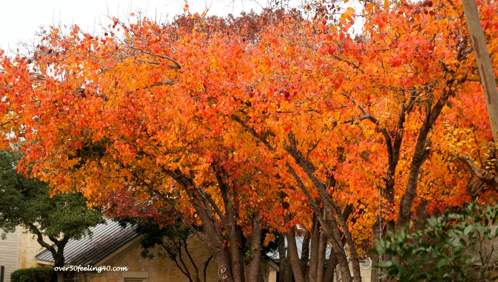 Pamela Lutrell's fall color in the neighborhood
