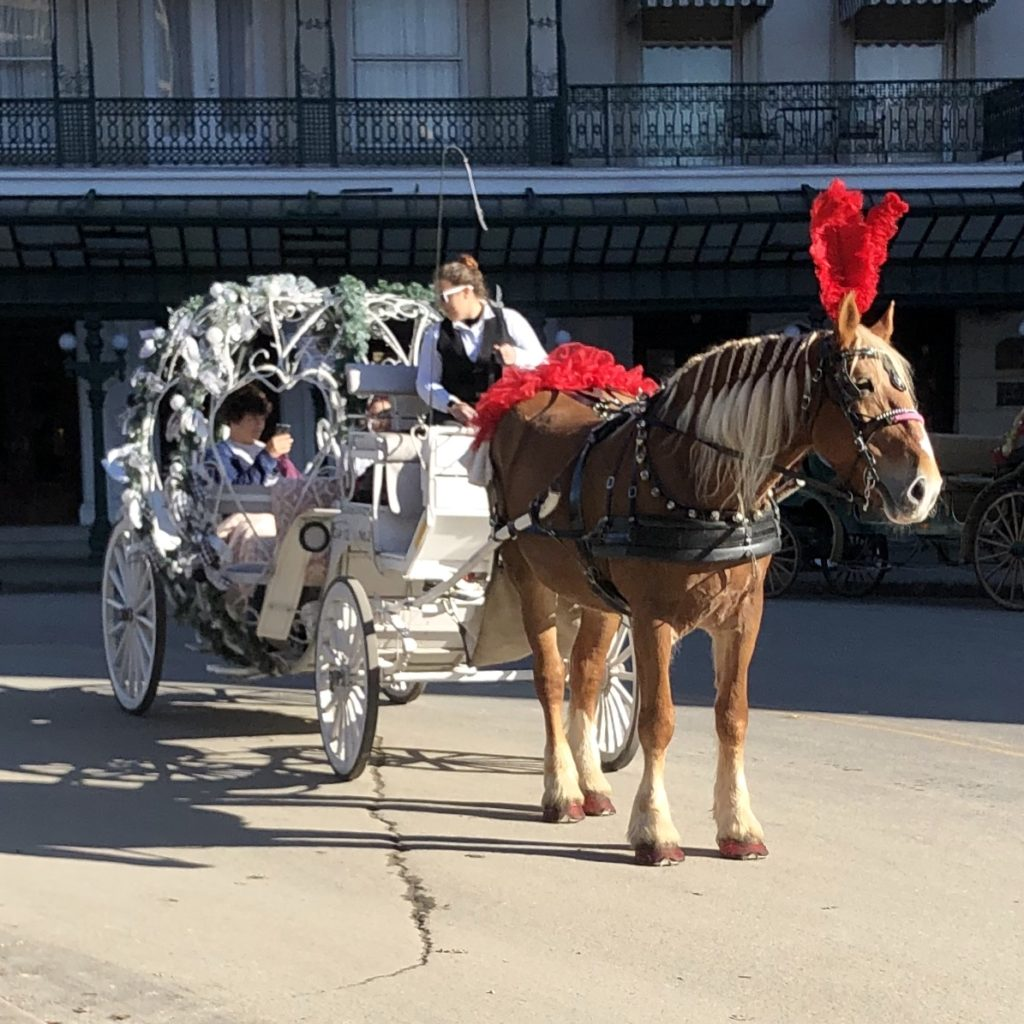 Pamela Lutrell in horse drawn carriage in San Antonio