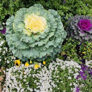 Pamela Lutrell shows Rainbow Gardens in San Antonio