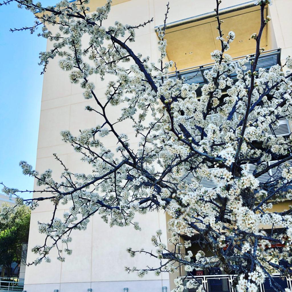 Pamela Lutrell finds first blooms of spring