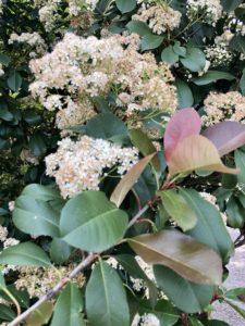 Pamela Lutrell shares springtime in San Antonio