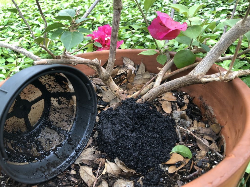 Using Coffee Grounds as plant food on OVer 50 Feeling 40