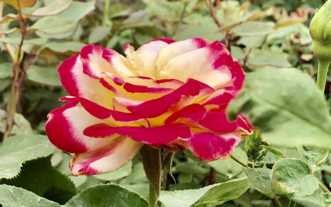 The Weekly Journal: Stop to Smell the Roses (while making decisions as business opens again