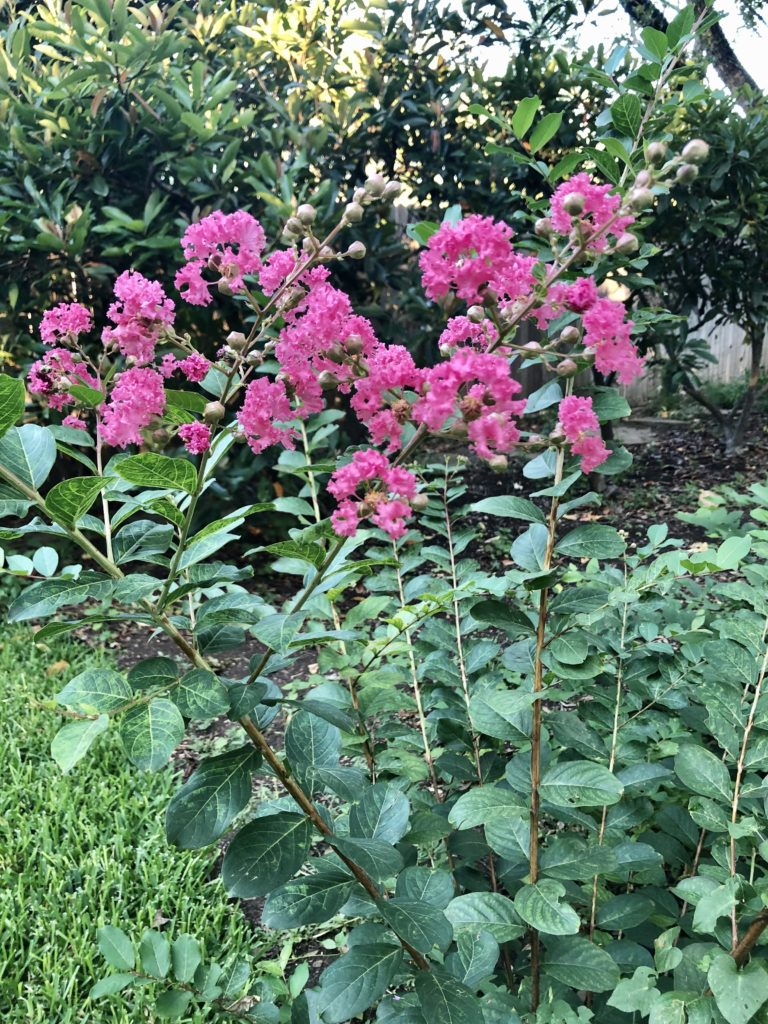 Pink Flowers on Over 50 Feeling 40