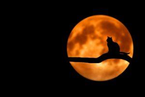Full Moon on Halloween for Over 50 Feeling 40