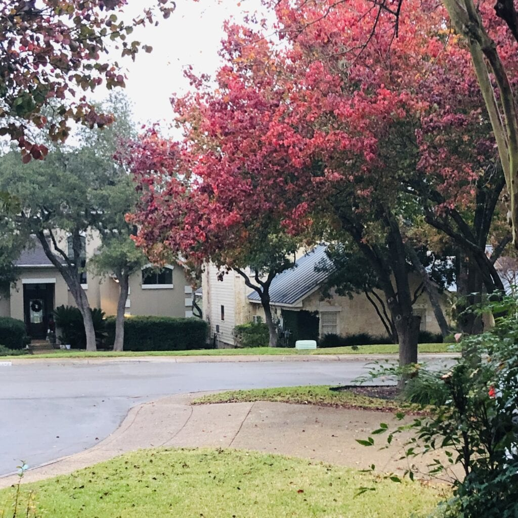 Autumn in San Antonio 2020