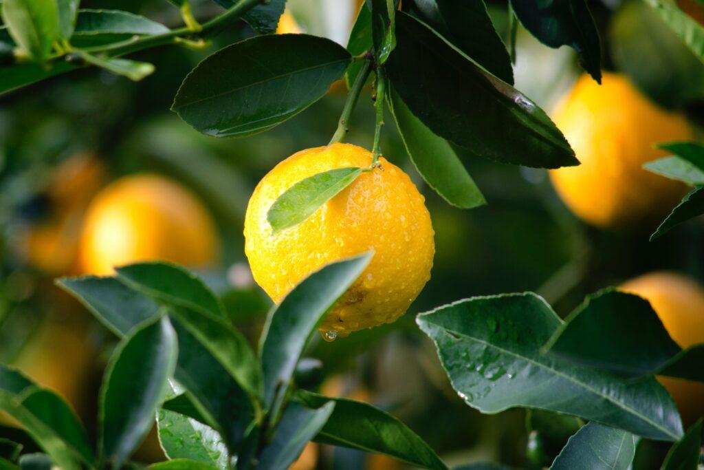 Healthy discontentment turns lemons into lemonade