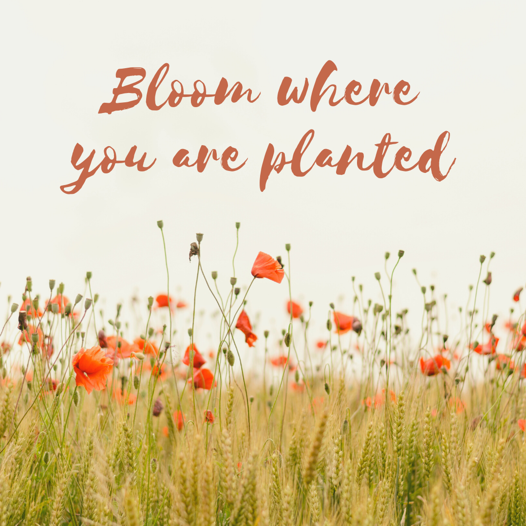 All over age 60, it's your time to bloom